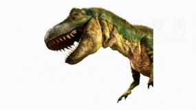 实景恐龙14 png文件